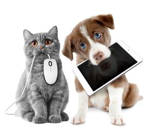 cat and dog on computer